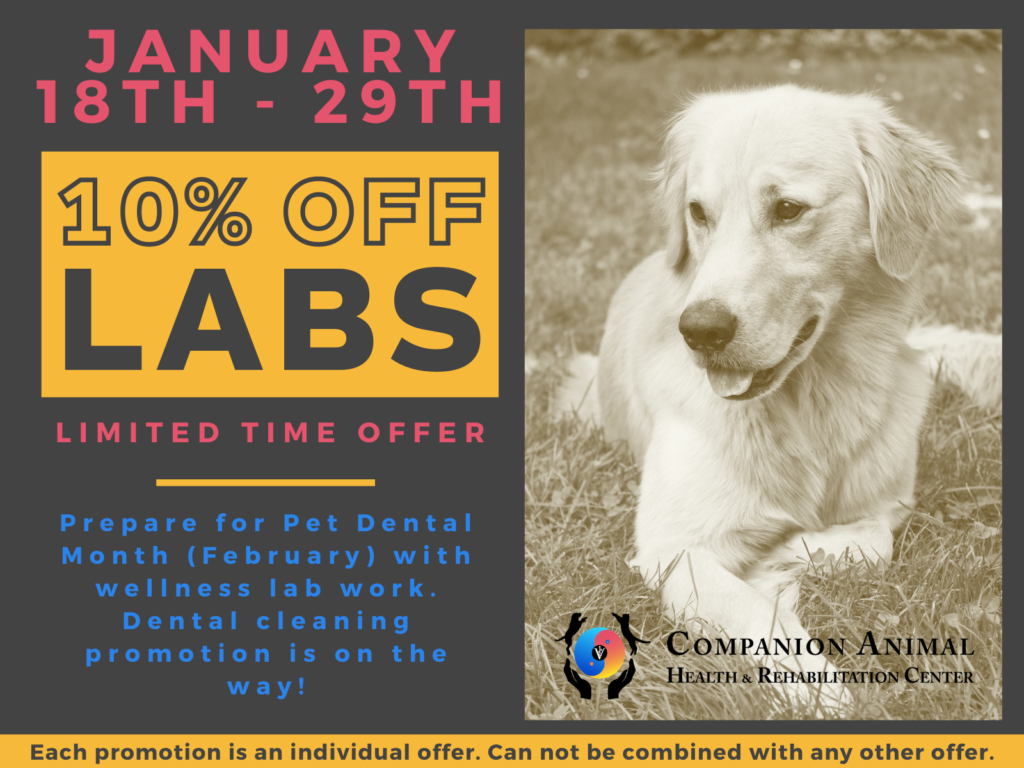 Companion Lab Work Promotion. Prepare for pet dental health month