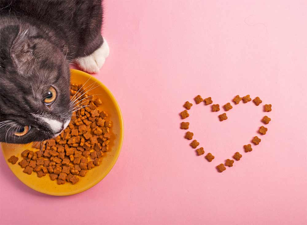healthy-foods-cats-love-strip