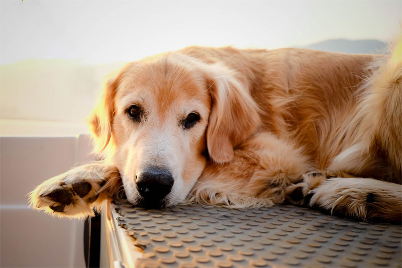 how-can-acupuncture-help-my-pet-strip3